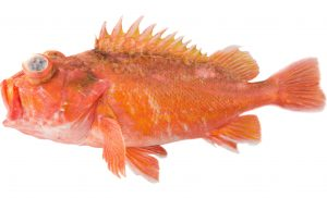 Greenblotched Rockfish