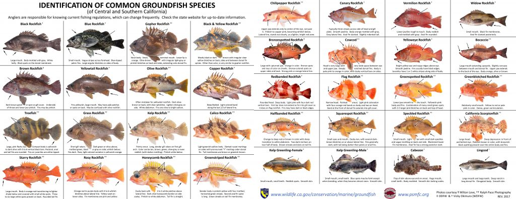 Fish ID – RecFIN